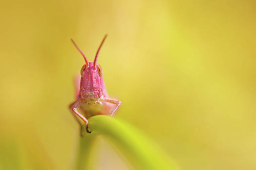 Pink Nymph by Roeselien Raimond
