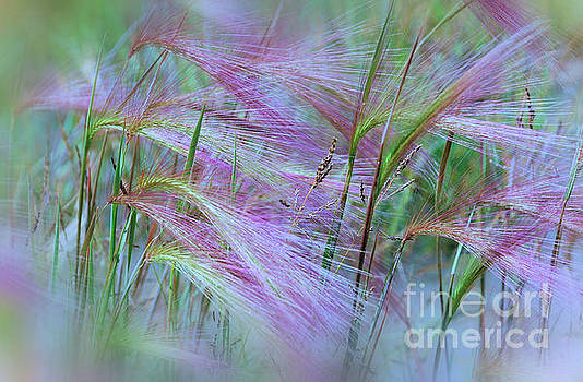 Pink Ornamental Grass by Elaine Manley