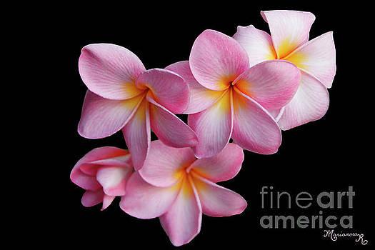 Pink Plumeria by Mariarosa Rockefeller