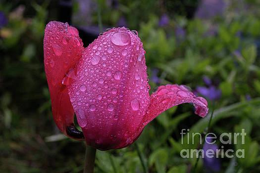 Pink Rain by Linda Howes
