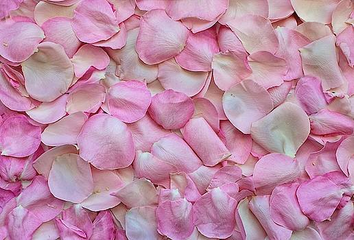 Pink rose petals by Top Wallpapers