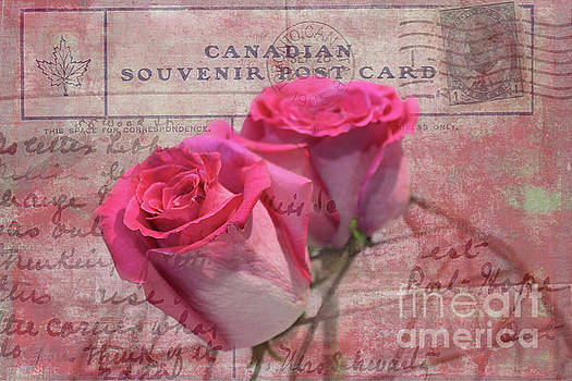 Pink Rosebuds on Vintage 1905 Postcard by Nina Silver