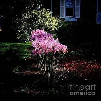 Frank J Casella - Pink Sunlit Flowers in the Neighborhood