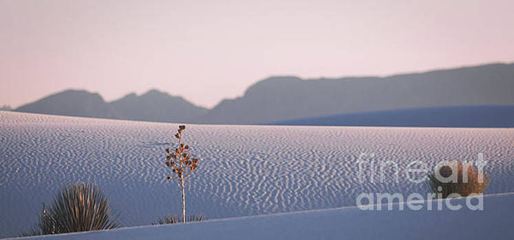 Pink Sunset At White Sands by Doug Sturgess