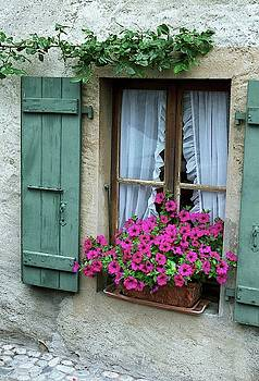 Pink Window Box by Susie Rieple