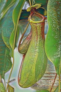 Pitcher Plant by Deborah Benoit