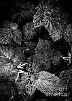 Justyna Jaszke JBJart - Plant photo 1 black and white