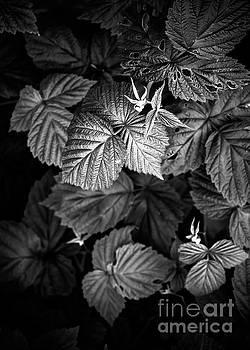 Justyna Jaszke JBJart - Plant photo 2 black and white
