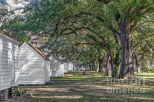 Plantation Cabins - Mcleod Plantation by Dale Powell