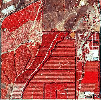 Plantation in Southern California by Planet Impression
