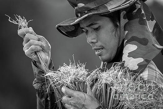 Planting Rice 201908062 by Lee Craker