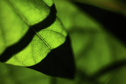 Jenny Rainbow - Play of Light and Shadow. Green Leaf Macro 13