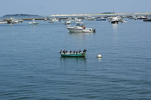 Plymouth Harbor by Ronni Dewey
