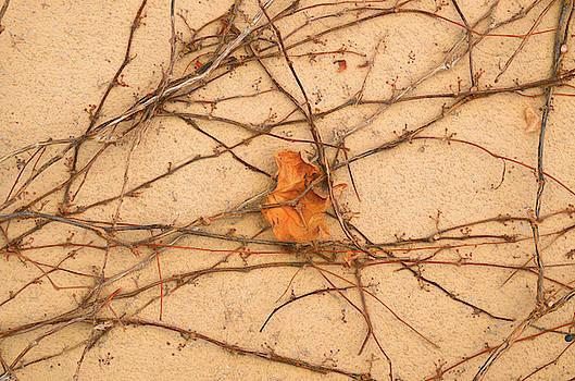Poignant 4 by Lynda Lehmann
