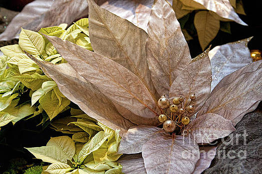 Tatiana Travelways - Poinsettia winter decoration