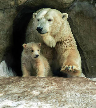 Polar Bear Mom protect cub by Svetlana Ledneva-Schukina
