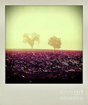Polaroid effect of trees in countryside by Bernard Jaubert