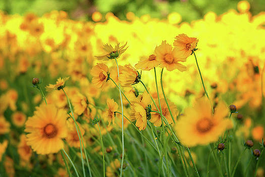 Pollinator Field by Cindy Lark Hartman