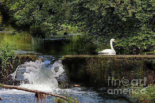 Pond at Doneraile Wildlife Park by Natural Focal Point Photography