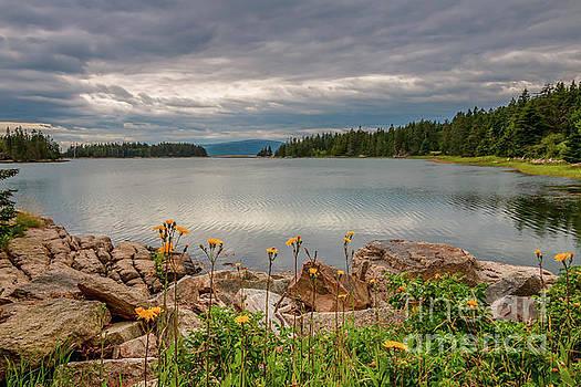 Pond Island Schoodic Peninsula by Elizabeth Dow