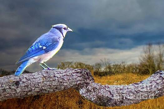 Pondering Bluejay by Janette Boyd