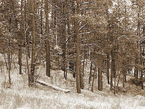 Ponderosas in the Snow by Cris Fulton