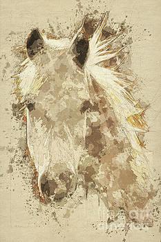 Pony by John Edwards