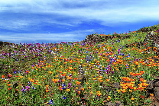 Poppies And More On North Table Mountain by James Eddy