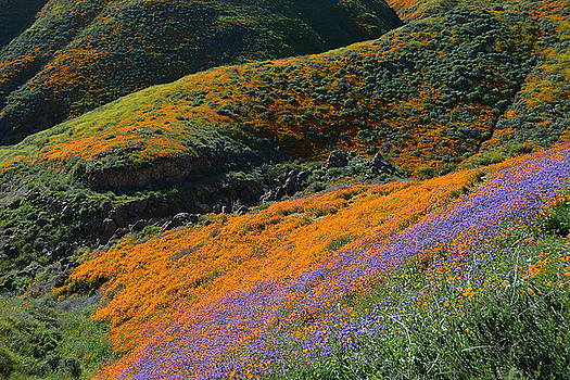 Poppies Bluebells and Rolling Hills by Glenn McCarthy Art and Photography