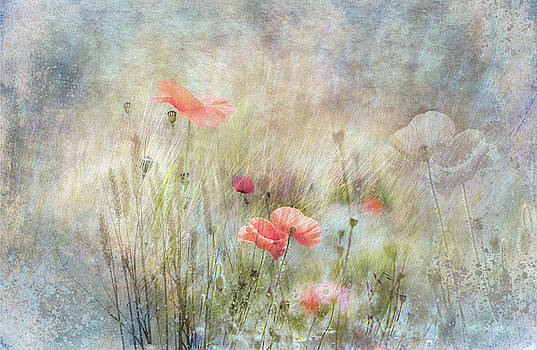Poppies by Glenys Garnett