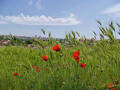 Poppy Flowers Landscape by Tamara Sushko