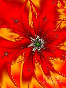 Poppy by Galina Lavrova