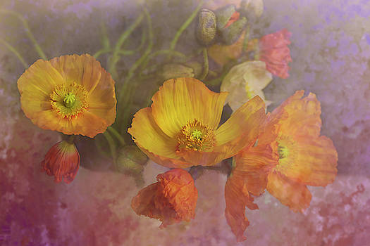 Poppy Love by Jeff Burgess