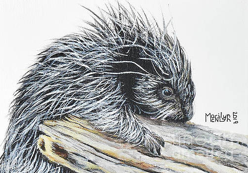 Porcupine Baby by Marilyn McNish