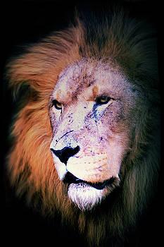 Portrait of a Lion  by Savannah Gibbs