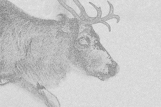 Portrait of a reindeer moving through snow - graphic monochrome by Intensivelight