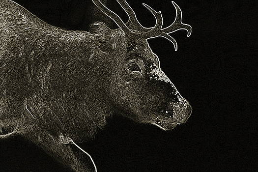 Portrait of a reindeer moving through snow - monochrome  negative by Intensivelight