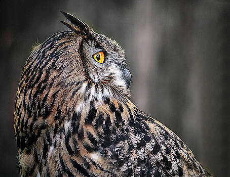Portrait Of An Owl by Wes and Dotty Weber