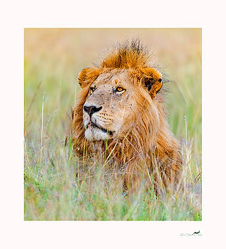 Portrait Of Royalty by From Dawn To Dusk Natural History Photography