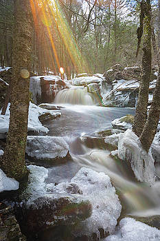 Portrait of Winter flare by Brian Hale