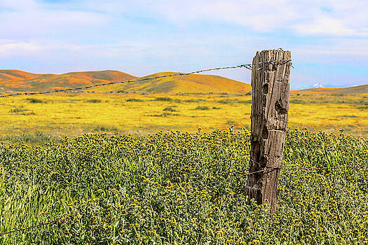 Post and Poppies by Peter Tellone