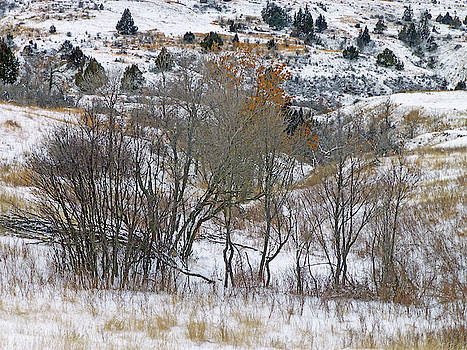 Prairie Winter Reverie by Cris Fulton
