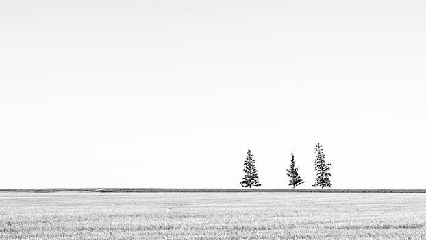 Prairie Woodland by Hamish Mitchell
