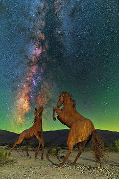 Prancing Horses  by Ralf Rohner