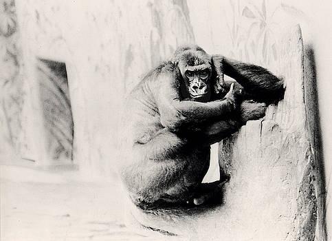 Precocious Primate by Doug LaRue