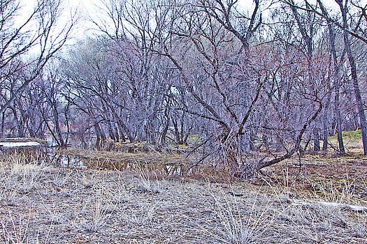 Prescott Arizona Watson Lake Bayou trees scrub water grasses 3142019 4916 by David Frederick
