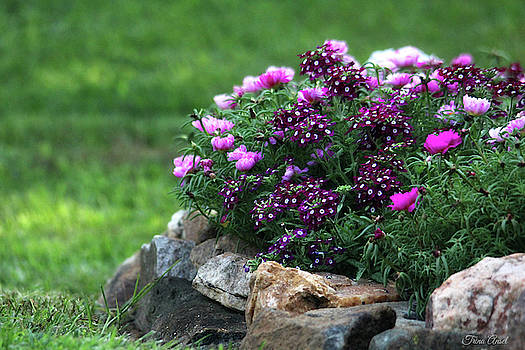 Pretty in Pink and Purple by Trina Ansel