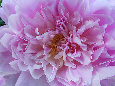 Pretty In Pink by Kathy Gail
