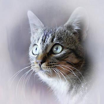 Pretty Little Kitty by Leticia Latocki