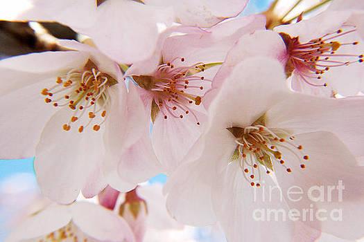 Pretty Pink Petals by Geraldine DeBoer